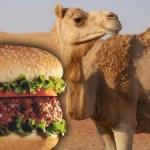 Las hamburguesas de camello triunfan en el Golfo