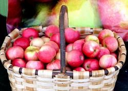 propiedades manzanas