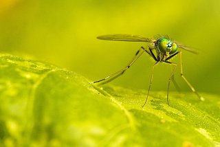 mosquito verano